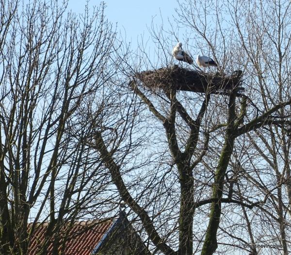Nederhorst 6