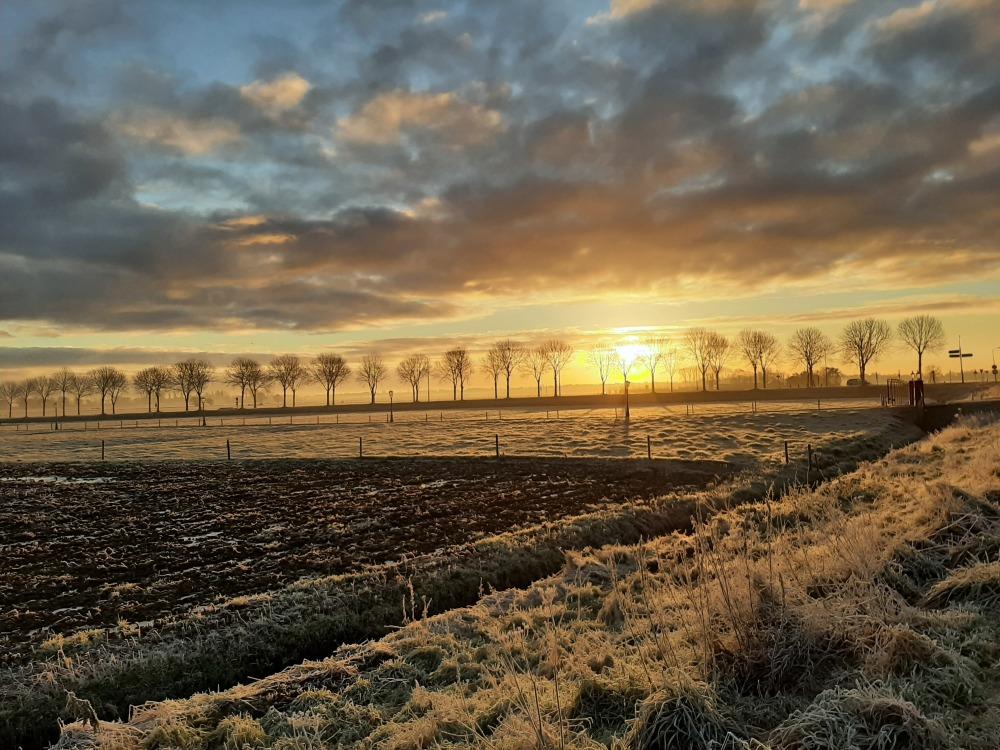 Winter morning 1
