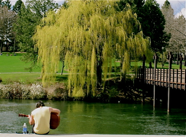 The weeping willow & the guitarist