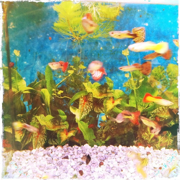 fish tank aquarium pet shop
