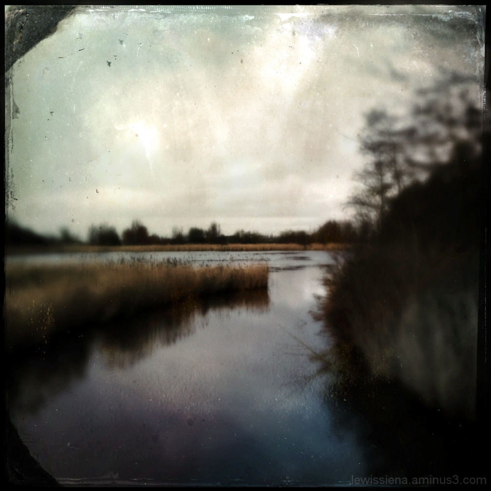 ven riet reed