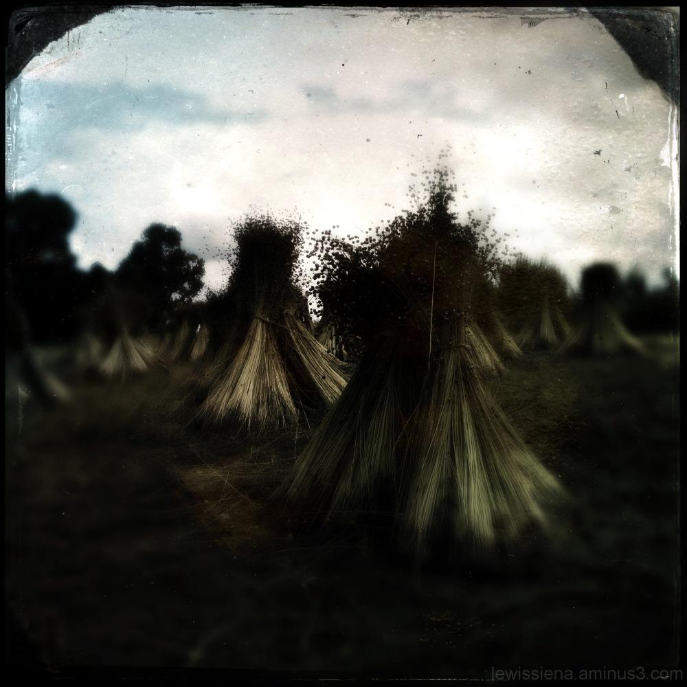 Vlas Flaaks Flax
