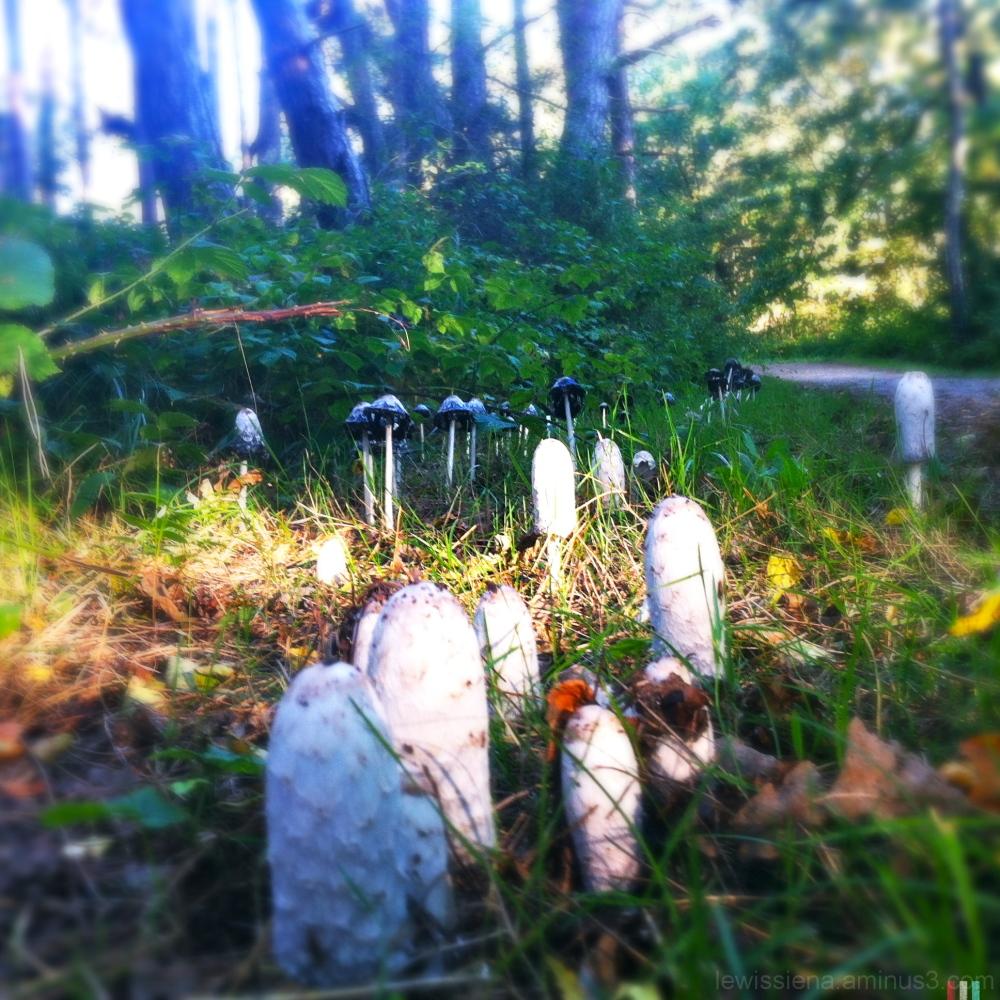paddestoelen mushrooms