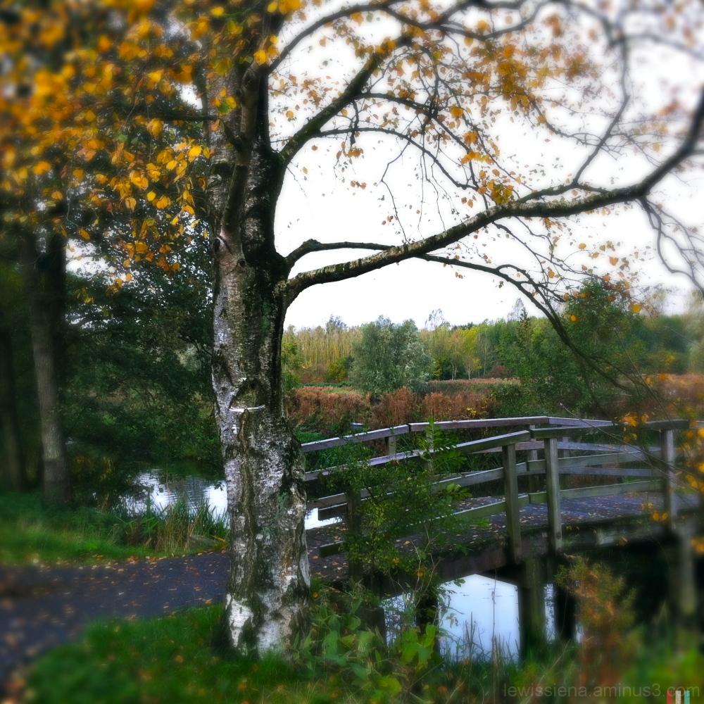 autumn herfst