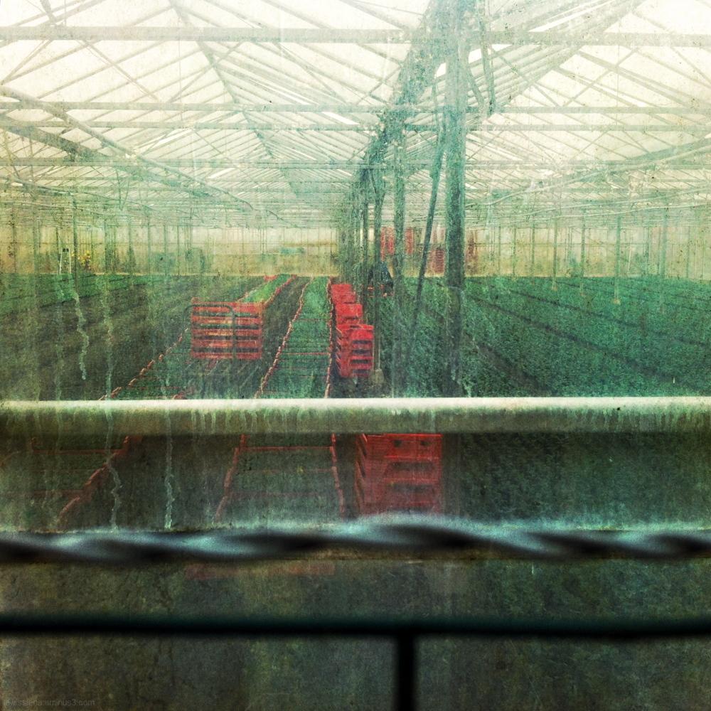 Kas spoor greenhouse