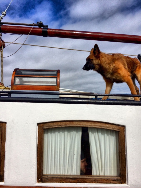 dog man window ship kajuit hond schip