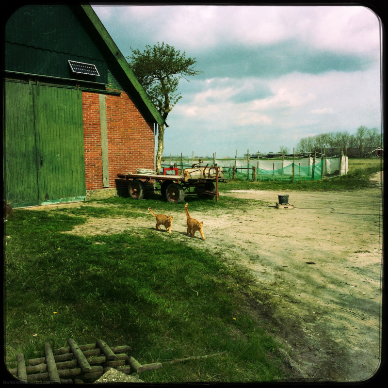 red cats farm