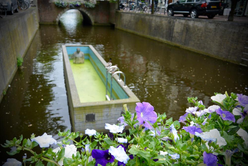 eendenkroos eenden zwembad pool gracht canal