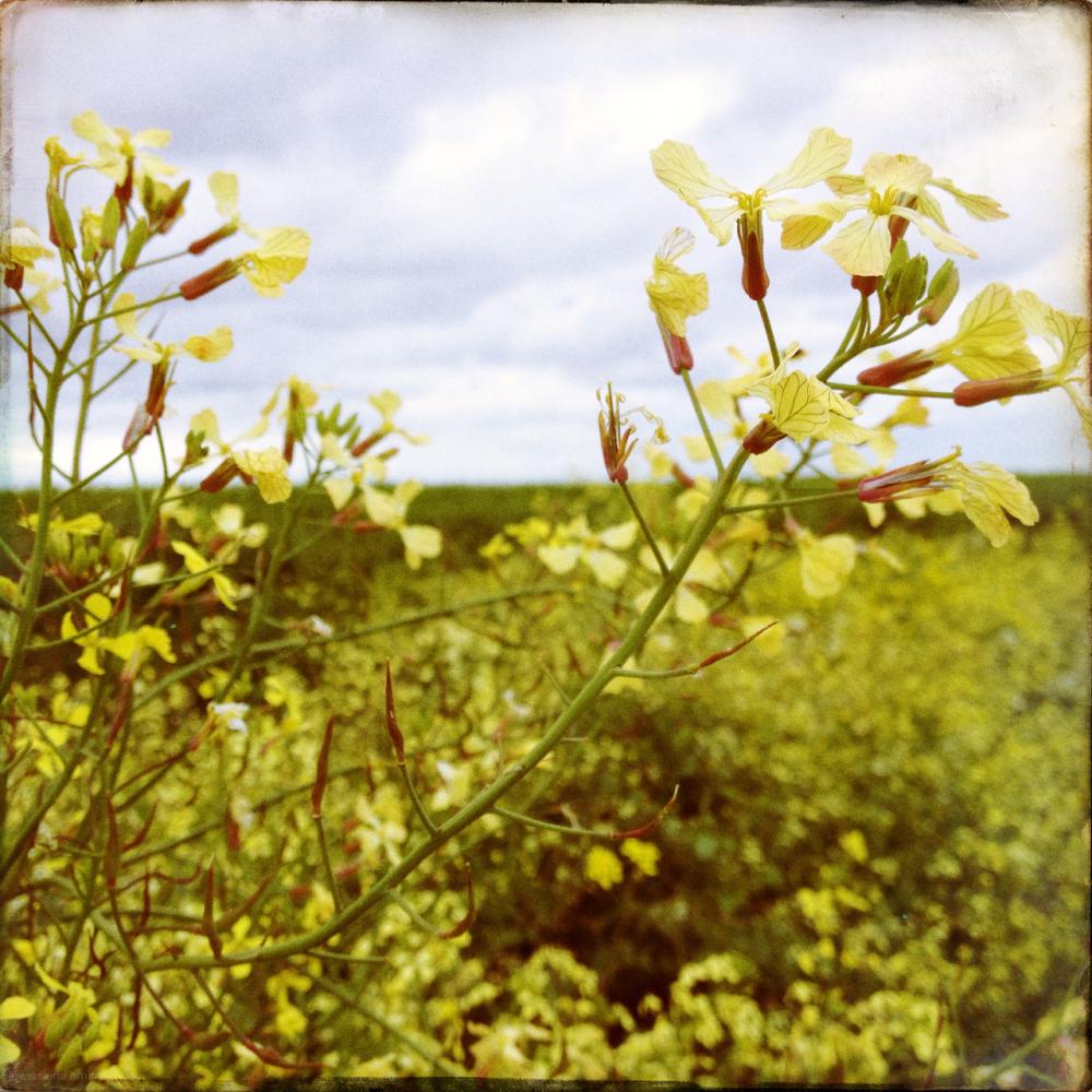 wadden bloem