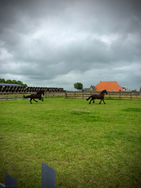 horse paard gallop canter