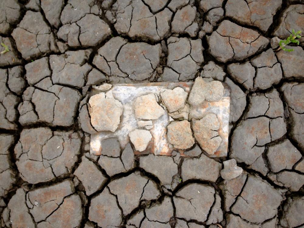 clay klei wadden argil zeekraal samphire