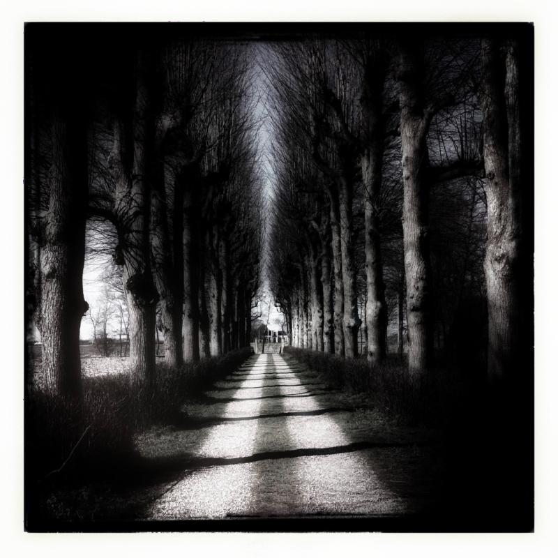 pad path willow shadow wilgen