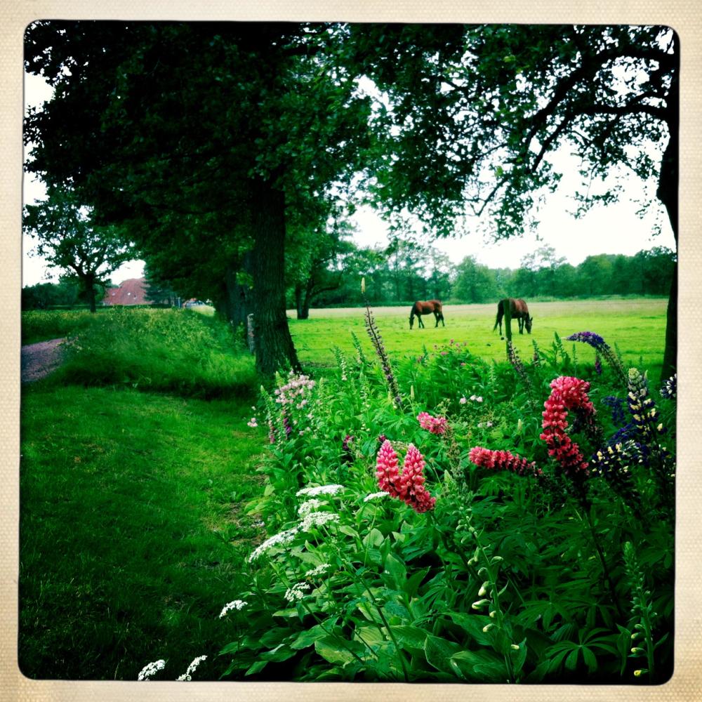 Lupine paarden horses