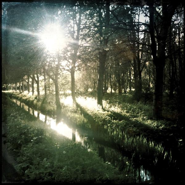 bos trees sun zon