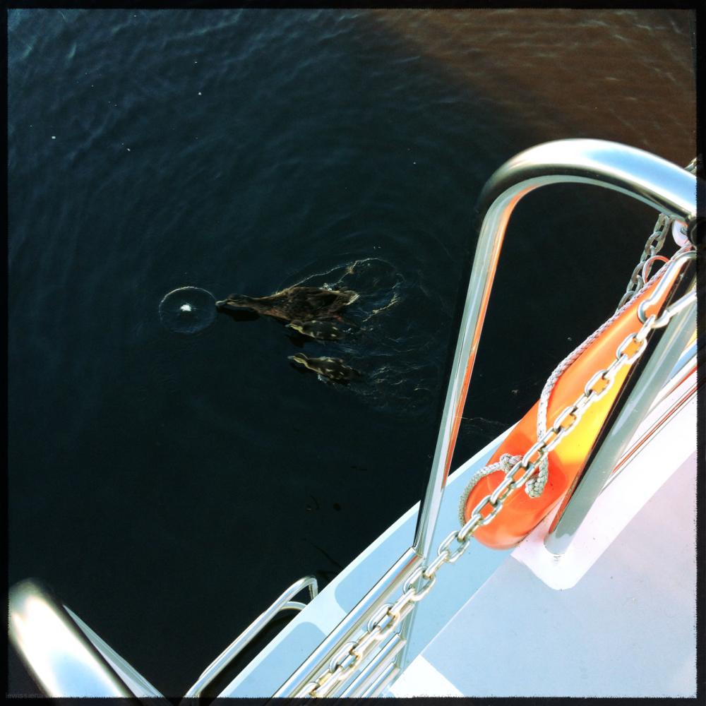 duck duckling boat bread eend