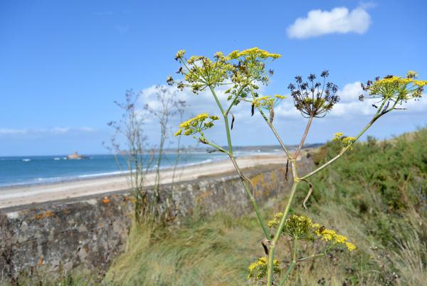 yellow flower shore