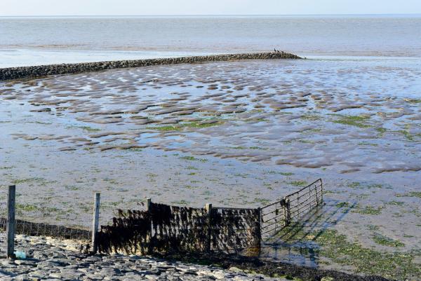algae zeewier waddenzee