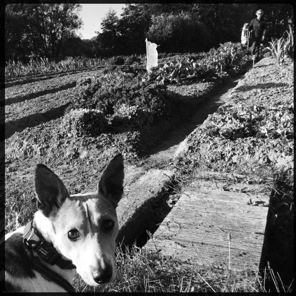 garden dog