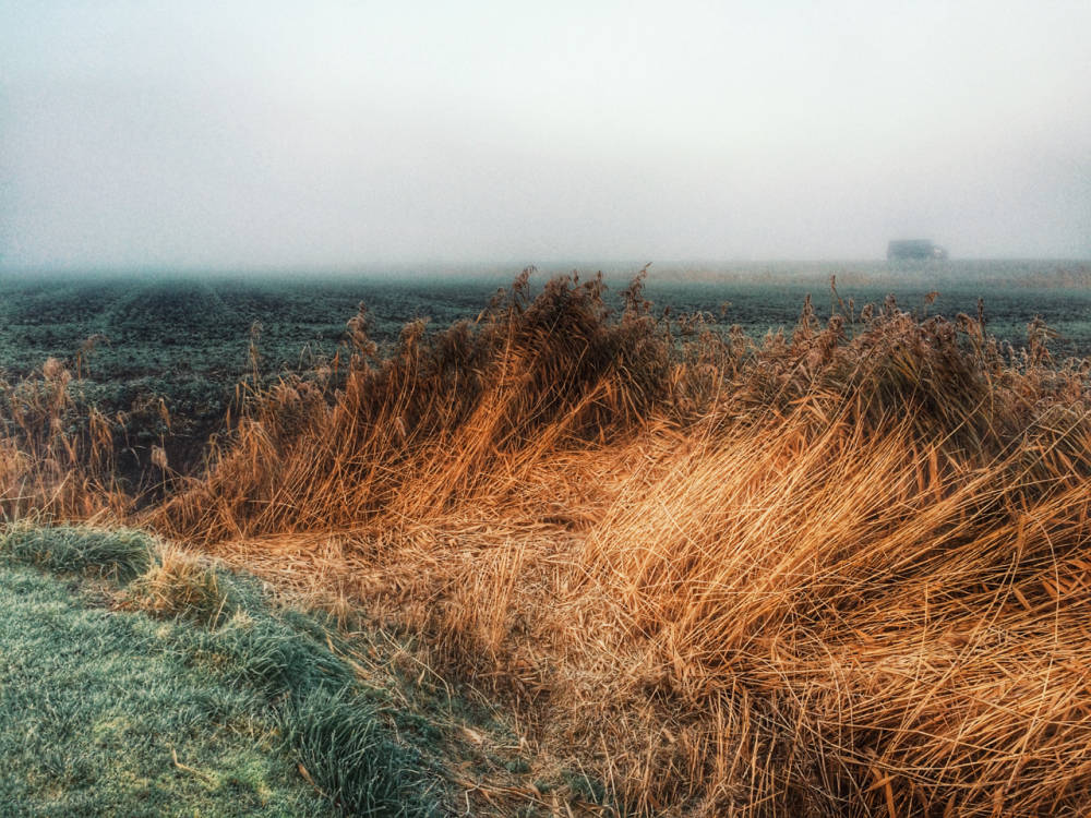 Mist Riet Reed sloot ditch vorst frost