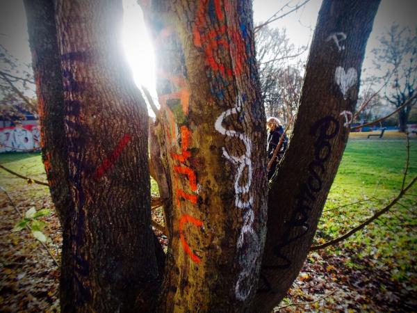 P. loves D on a Tree