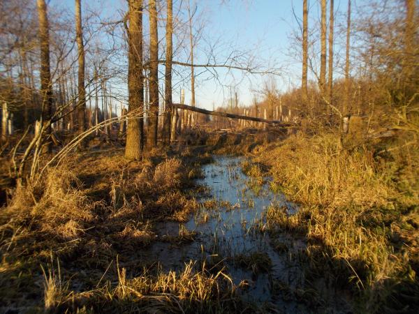 leeuwarder bos storm geknakt bomen snapped