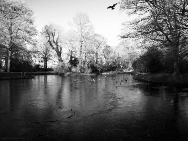 park pond vijver vogels birds