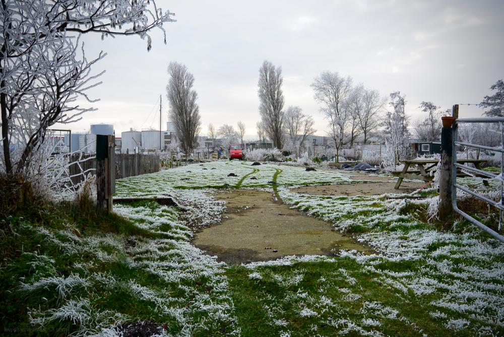 community garden volkstuin frost rijp karretje