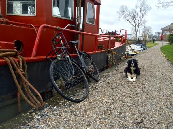 dog hond boat gracht moat