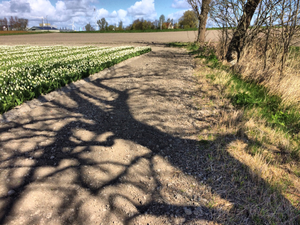 tree shadow schaduw field veld boom