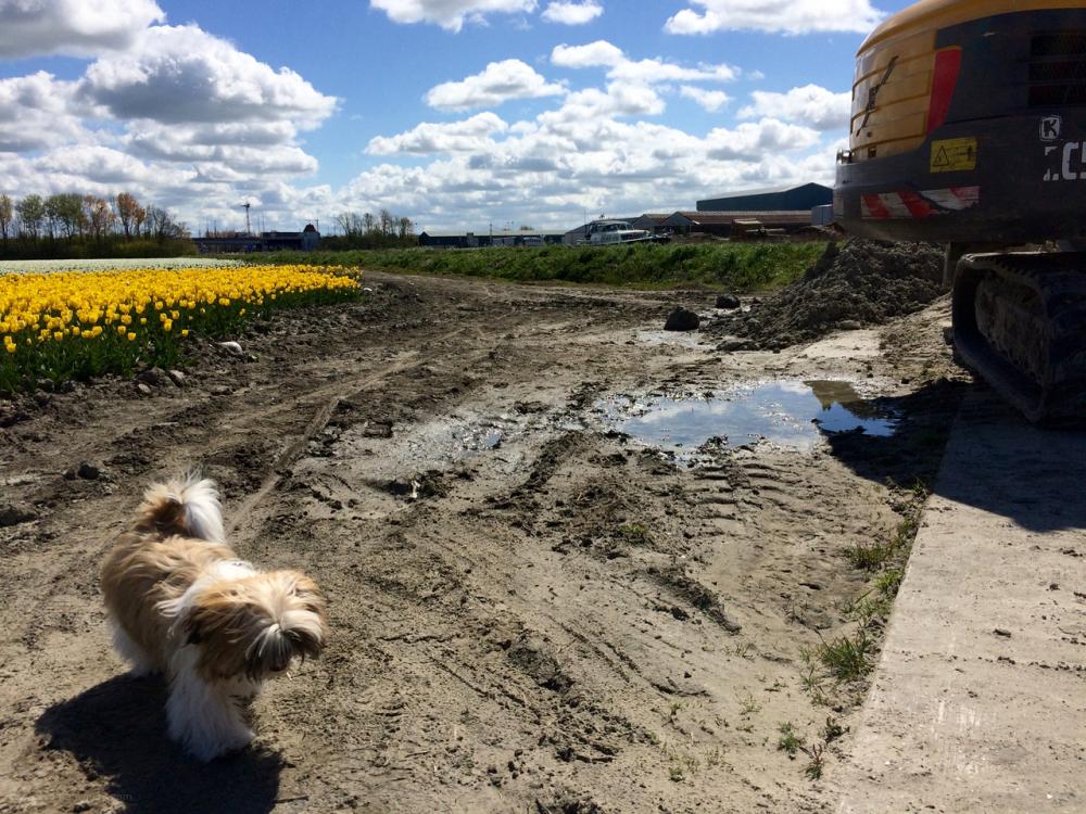 dog caterpillar toby tulip