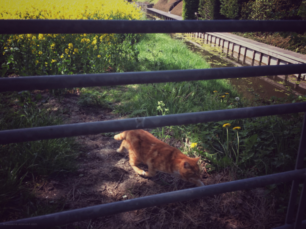 koolzaad ginger cat rapeseed fence hek