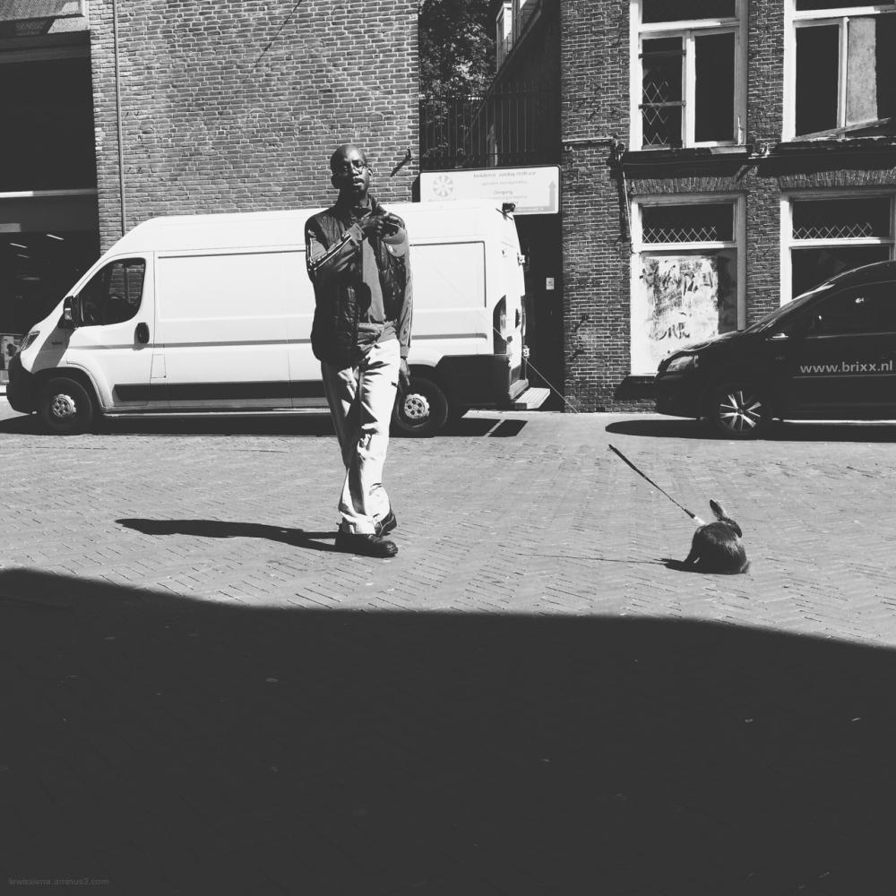 mr rabbit konijn