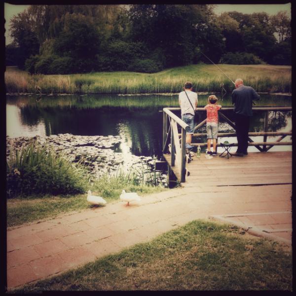vissers pond park eenden ducks