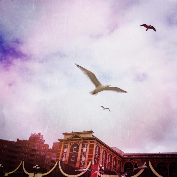 seagulls zeevogels meeuwen