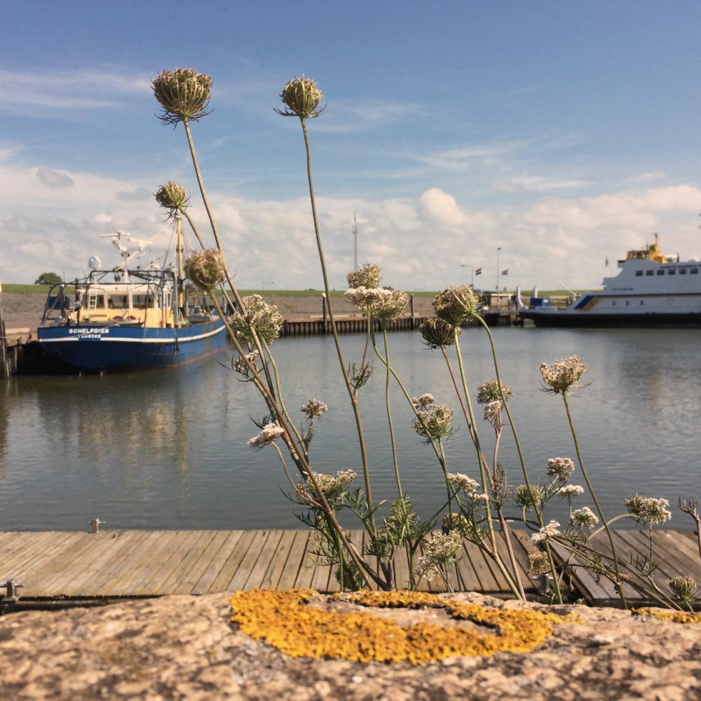ships plants