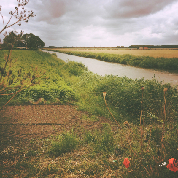 weide grassland pasture canal