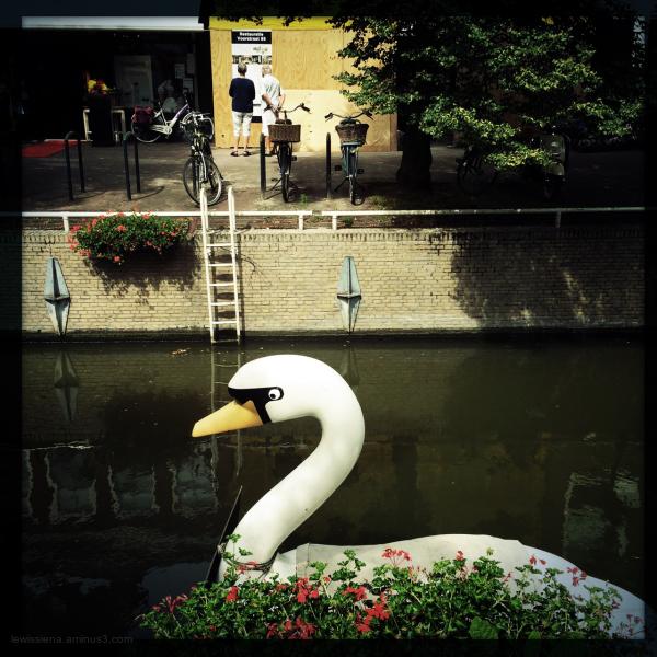 swan canal