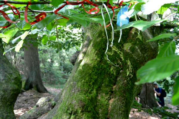 forest tree ribbons lintjes