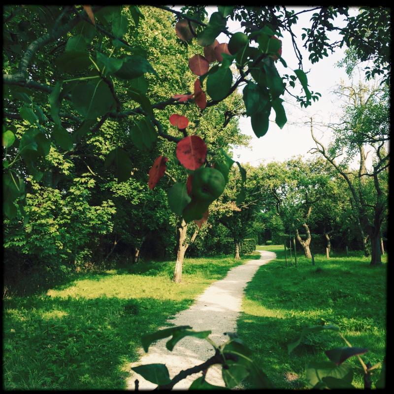 fruit tree boomgaard