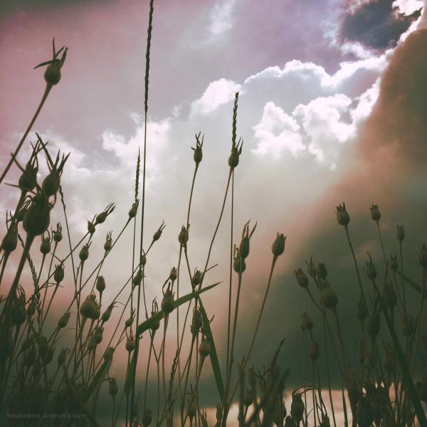 gras wolken zon
