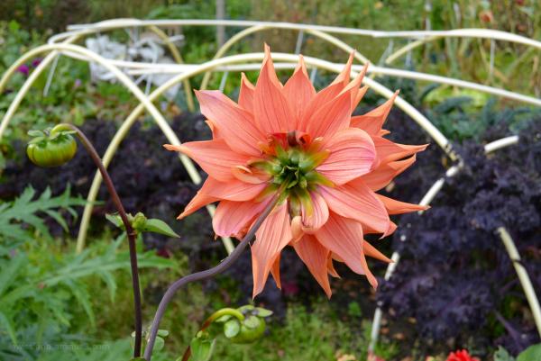 bloem flower achterkant backside