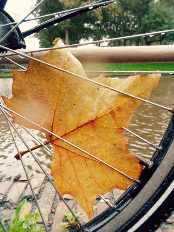 blad spaken spokes leaf rain
