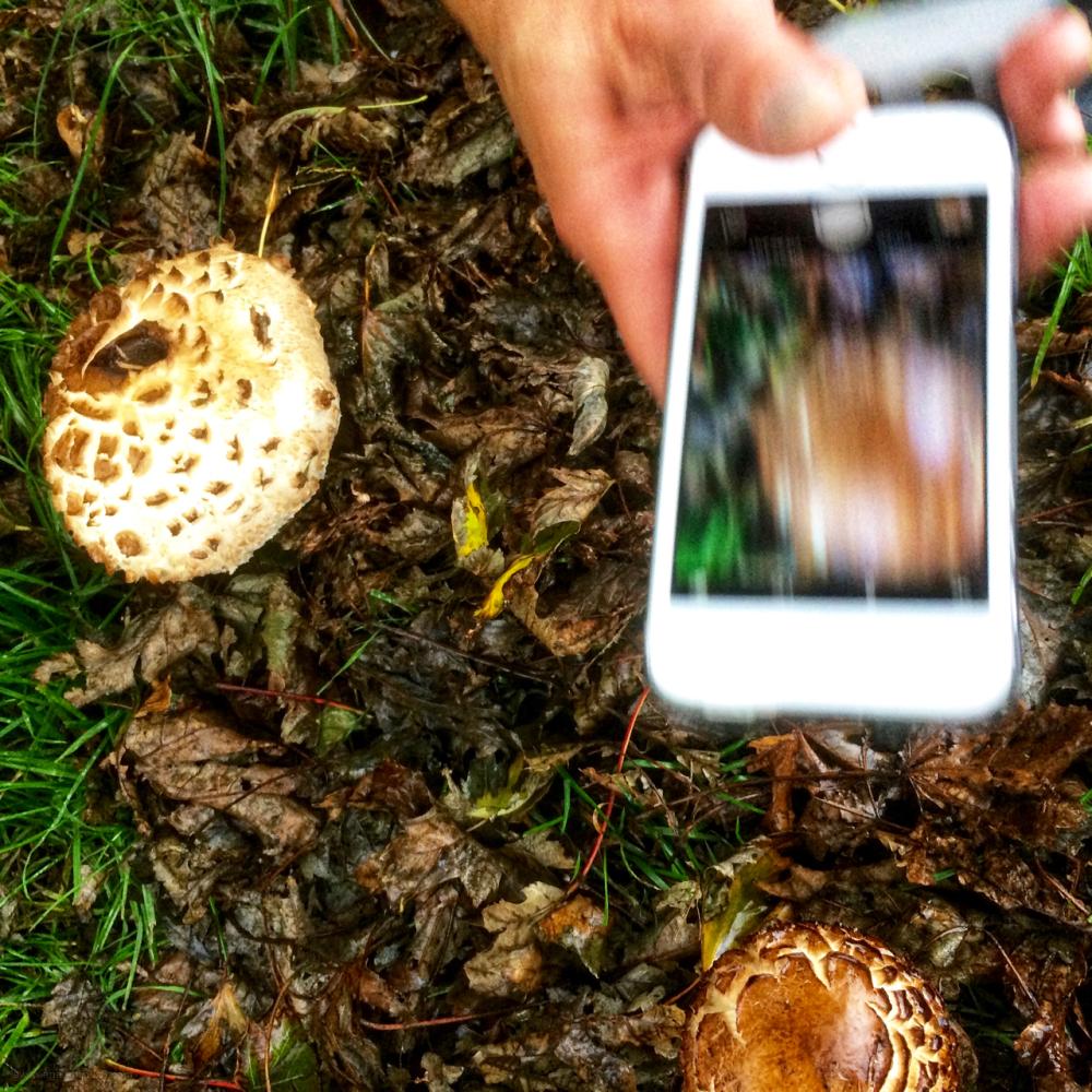 mushroom paddestoel