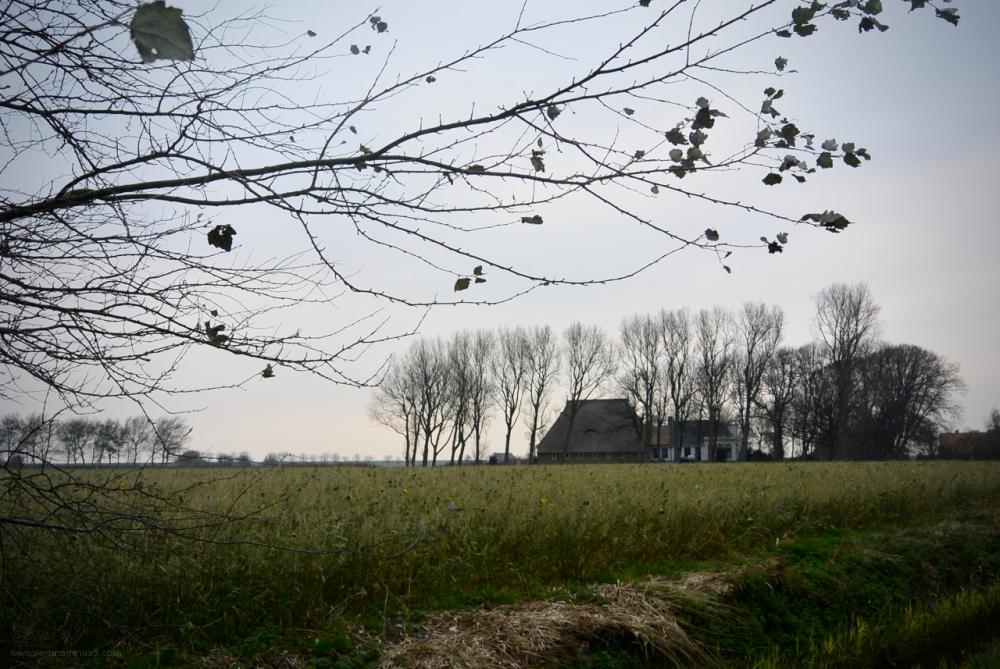 field farm boerderij friesland