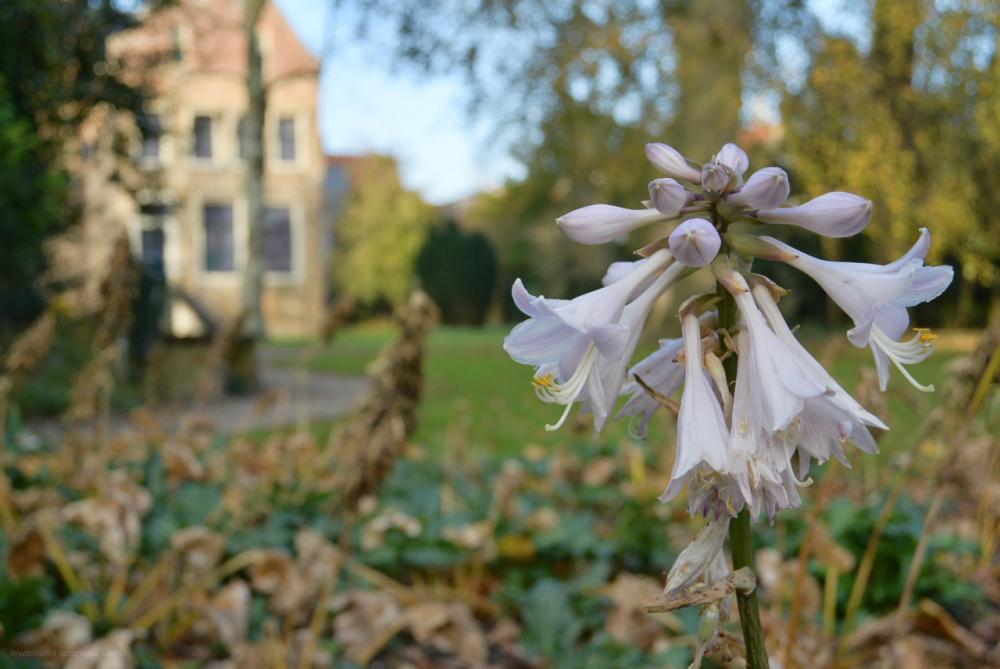 tuin franeker garden