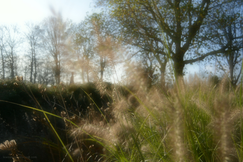 gras grass trees bomen