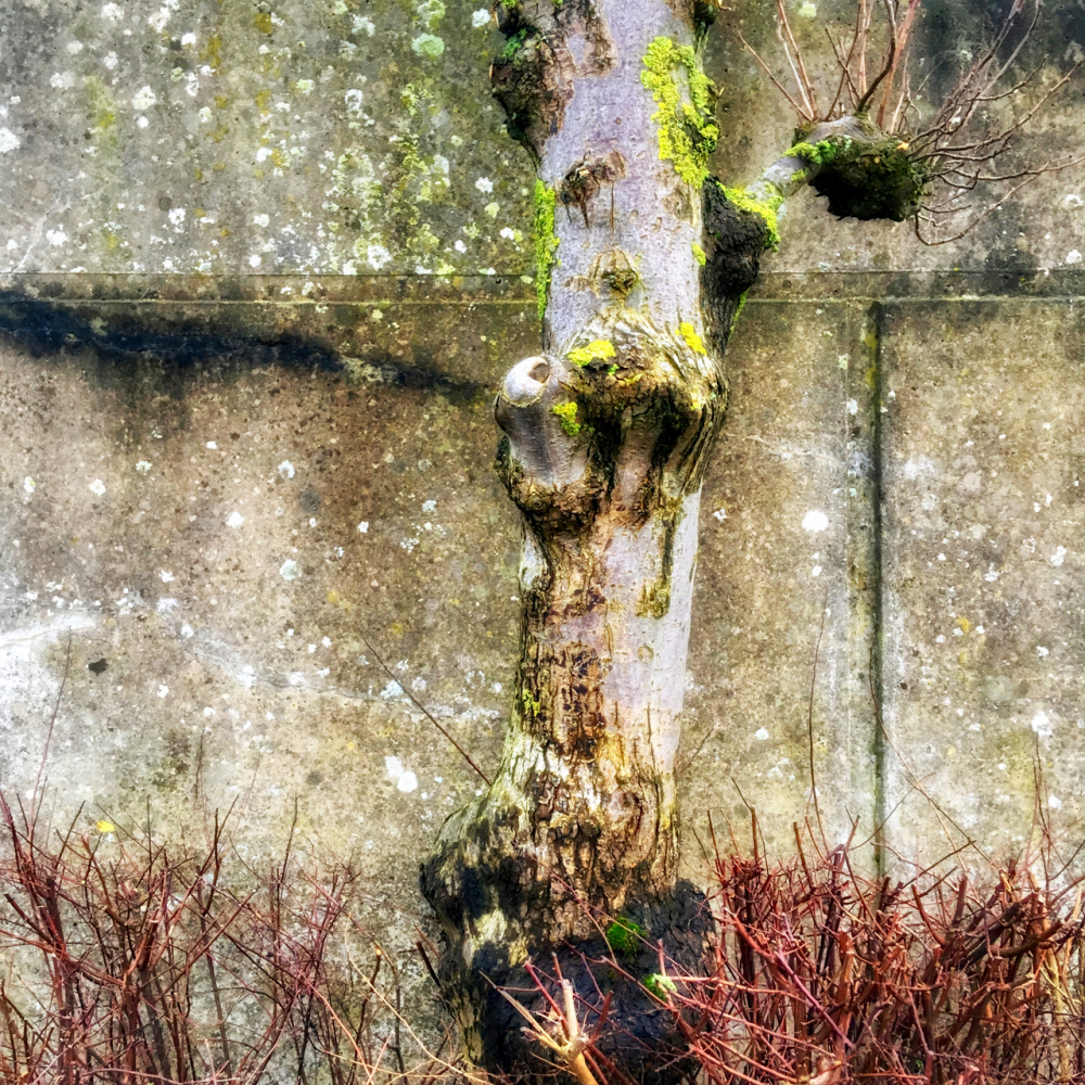boom tree moss verweerd weathered