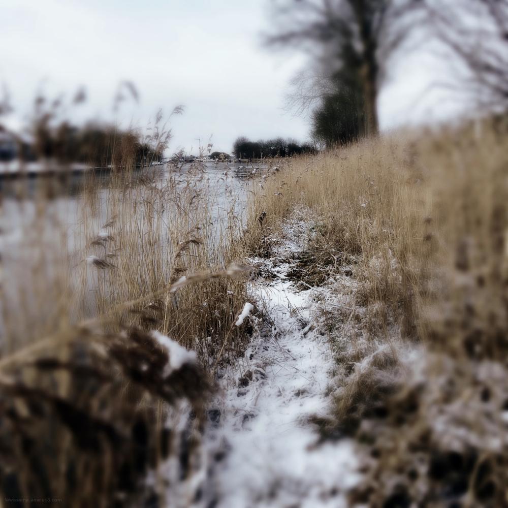 reed riet sneeuw snow