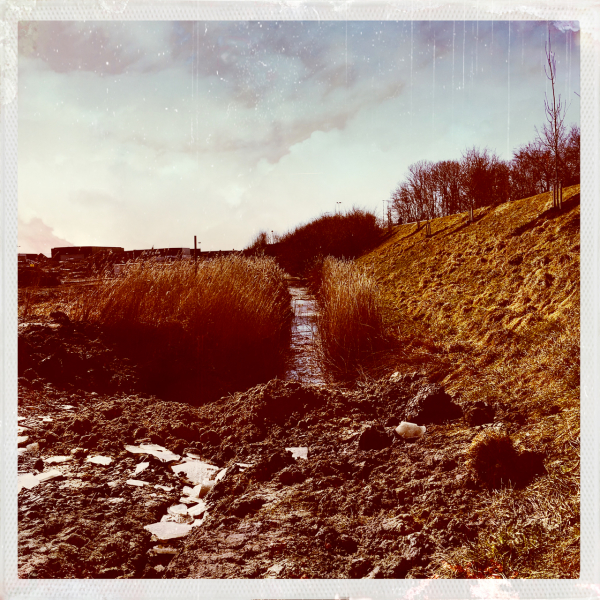 reed riet ditch sloot frozen ice ijs