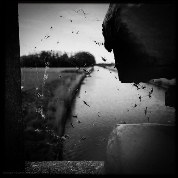 spider web flies bridge vliegjes brug